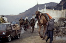 The Pashtuns of the Afridi group on camels, Khyber Pass (Iconographic document)