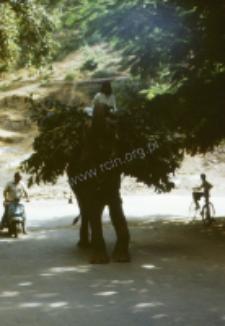 Elephant from Rajput palace (Iconographic document)