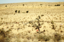 Graves in the Thar desert (Iconographic document)