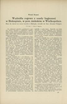 Wędzidła rogowe z osady bagiennej w Biskupinie, w pow. żnińskim w Wielkopolsce