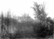 Stanowisko Horodok 1 A : widok przed rozpoczęciem rozkopywań