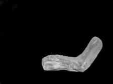 """Stanowisko Horodok II : szczątki drapieżnika opisane w publikacji """"Szczątki człowieka paleolitycznego"""". W: Ziemia ; 12 (1927) 4 s. 59-60."""