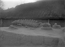 Stanowisko Horodok II : partia szyjno-grzbietowa kręgosłupa mamuta