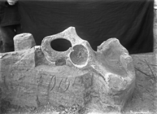 Stanowisko Horodok II : miednica mamuta