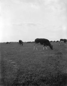 Koprzywnica koło Sandomierza : widok na łąki