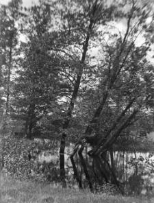 Mierzyce, gm. mińska : widok na zaścianek od strony łąki