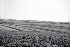 Przemyśl : krajobraz okolic Przemyśla