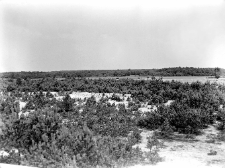 Orońsko, były powiat Szydłowiec : widok z wału wydmowego w stronę N (północną)