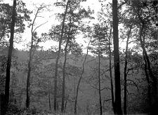 Las Suski (Polesie) : krawędź lasu z widokiem na dolinę Horynia