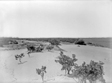 Miejscowość nieokreślona : widok na stanowisko wydmowe