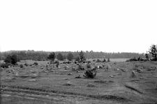 Miejscowość nieznana : stanowisko wydmowe