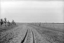 Świdry Wielkie : stanowisko wydmowe