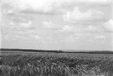 Miejscowość nieokreślona : zdjęcie krajobrazowe
