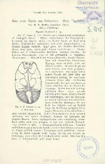 Eine neue Tipula aus Dalmatien. (Dipt. Tipulidae)