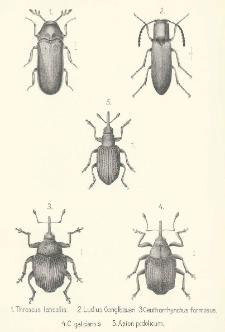 Coleopterorum species novae minusve cognitae in Galicia inventae. [Cz. 1]