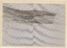 KZG, IV 98 A, 99 A B, profil archeologiczny E wykopu
