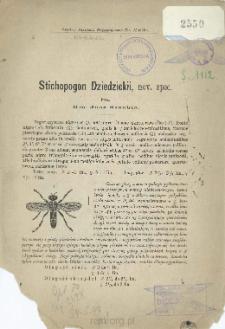 Stichopogon Dziedzickii, nov. spec.