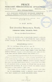 Rod chrostiku Beraeamyia, Mosely = Trichopteren Gattung Beraeamyia, Mosely