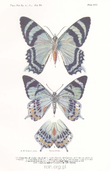 Two specially significant examples of insect mimicry