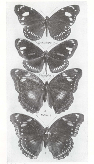 Mimicry in the Butterflies of Fiji considered in relation to the Euploeine and Danaine invasions of Polynesia and to the female forms of Hypo- limnas bolina L., in the Pacific