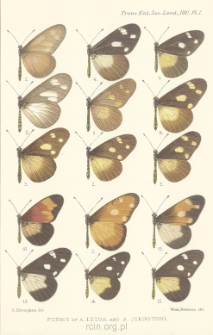 On the forms and geographical distribution of Acraea lycoa, Godt., and Acraea johnstoni, Godm.