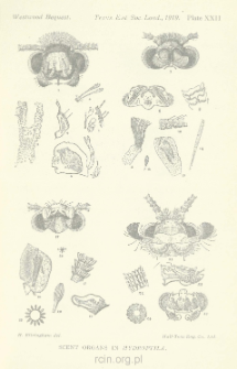 On the Histology of the Scentorgans in the Genus Hvdroptila, Dal.