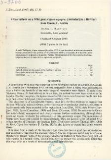 Observations on a Wild goat, Capra aegagrus (Artiodactyla : Bovidae) from Oman, E. Arabia