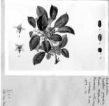 Farbiarstwo : materiały Zakładu Historii Kultury Materialnej