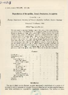 Reproduction of the quokka, Setonix brachyurus , in captivity