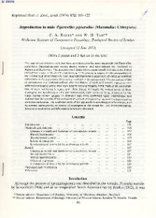 Reproduction in male Pipistrellus pipistrellus (Mammalia: Chiroptera)