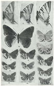 Motyle okolic Zawiercia