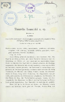 Timarcha Lomnickii n. sp.
